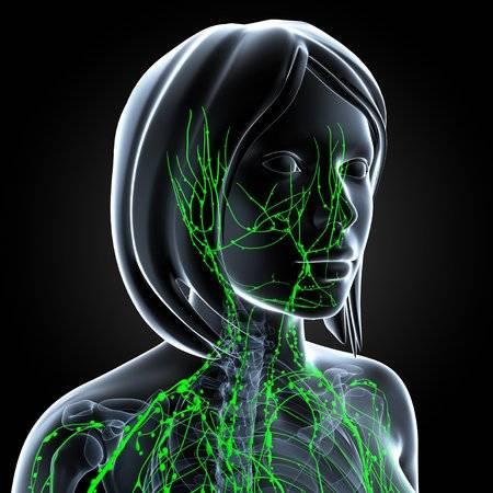 vasos linfáticos