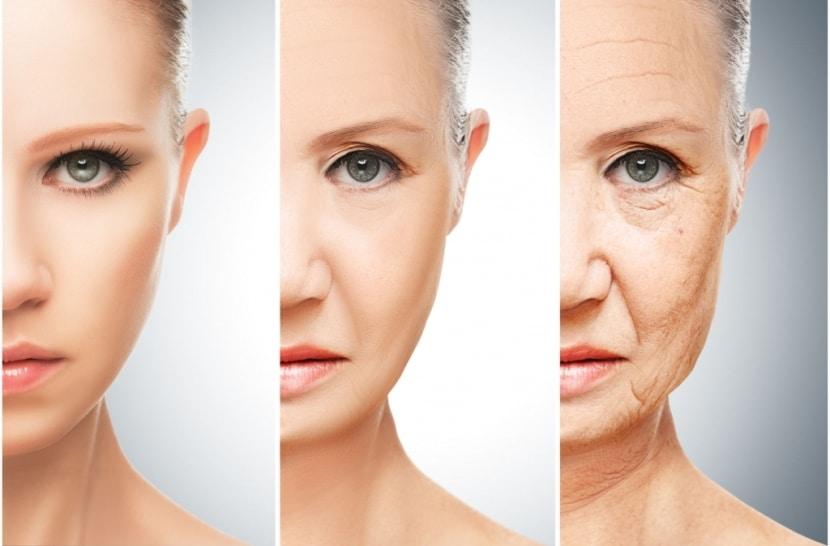 función de la piel