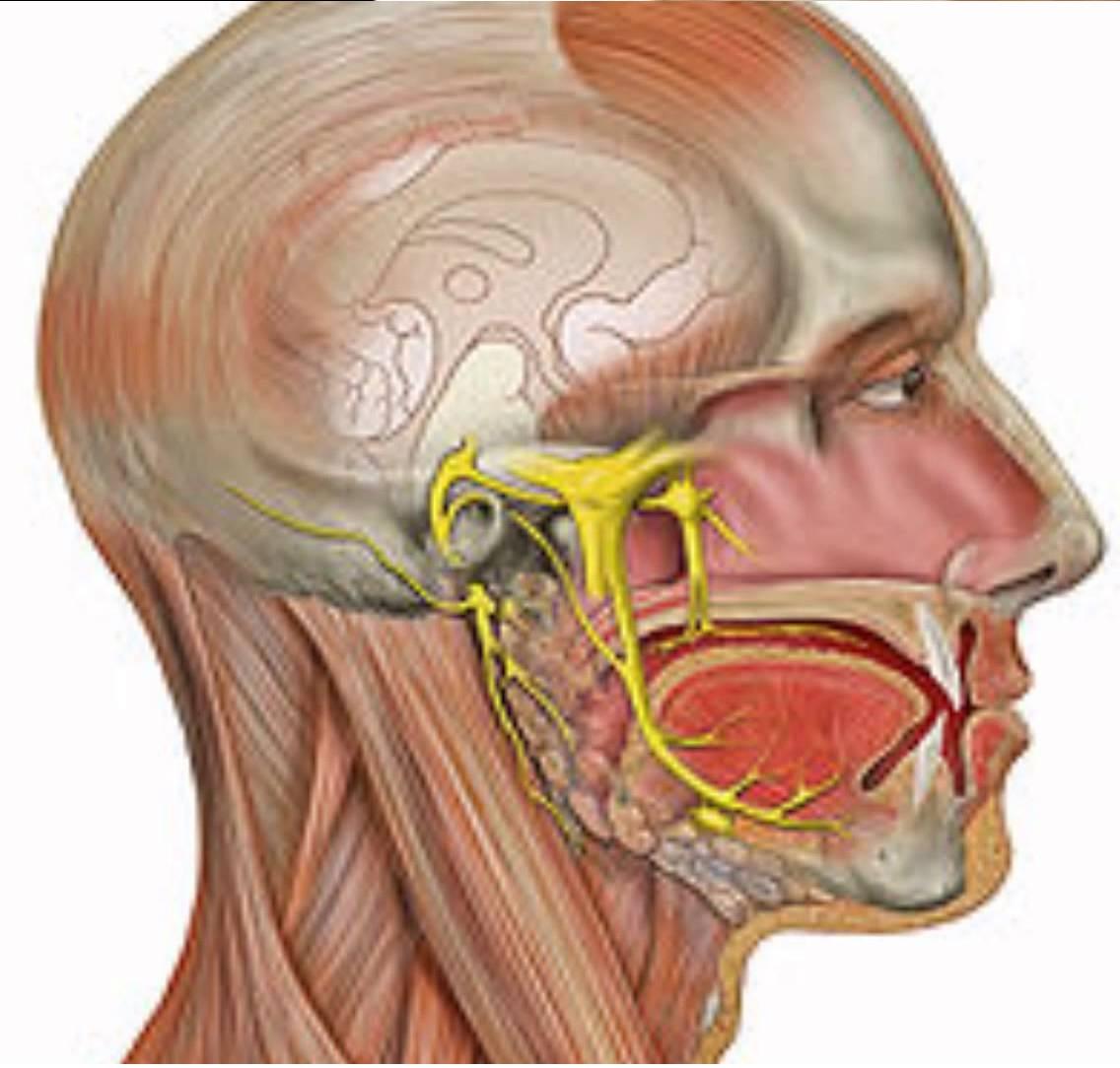 nervio auditivo