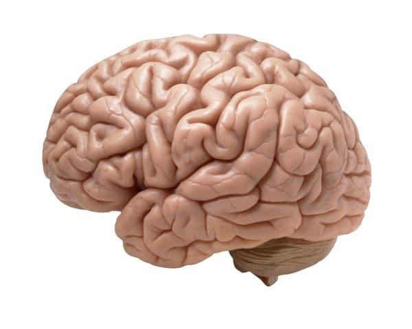 Sistema nerviso simpatico