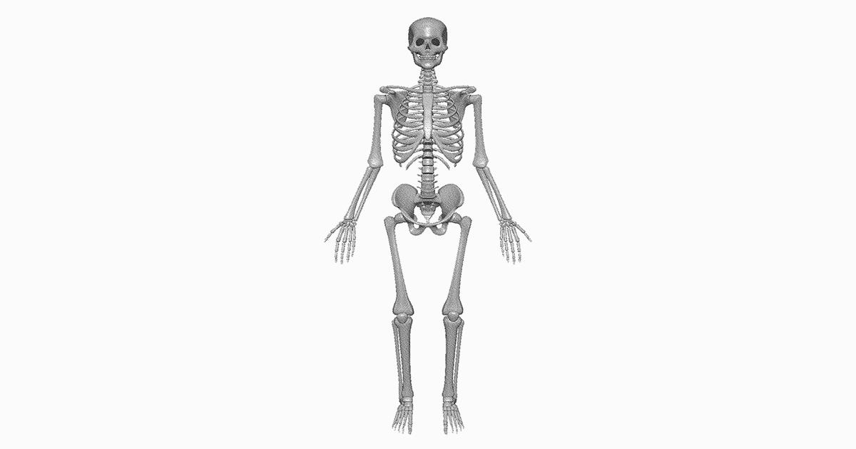 Sistema Óseo Conoce el Esqueleto Humano