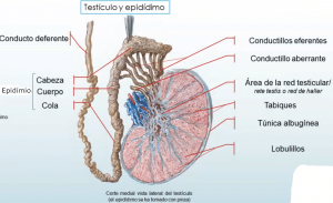 epidimio