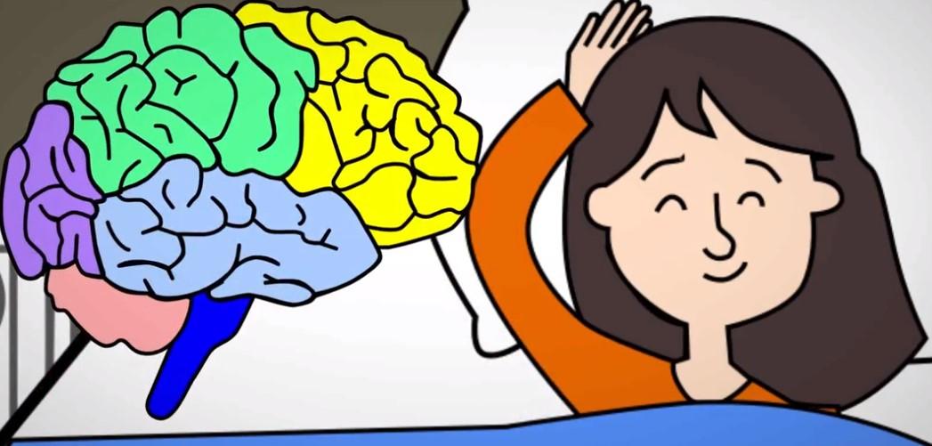 El cerebro necesita descansar
