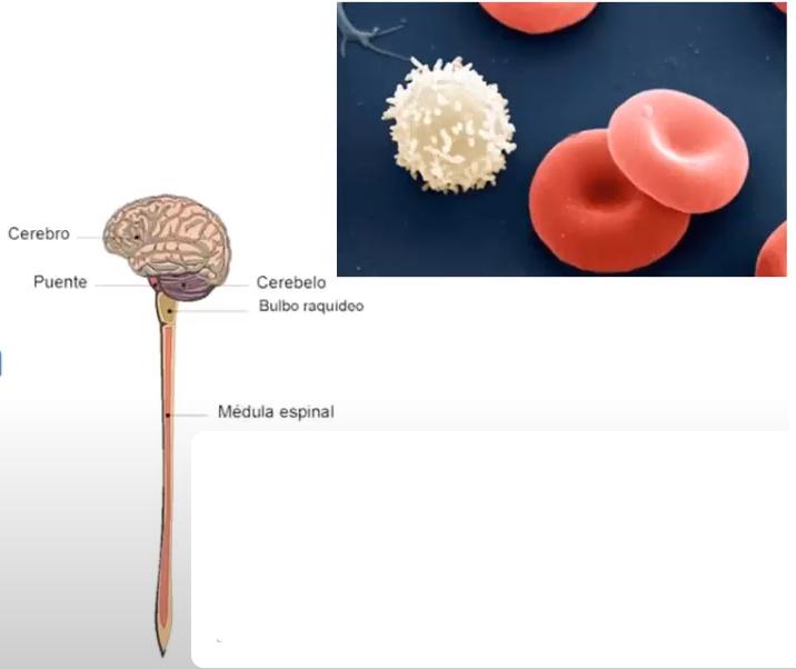 posibles infecciones del Virus HTLV
